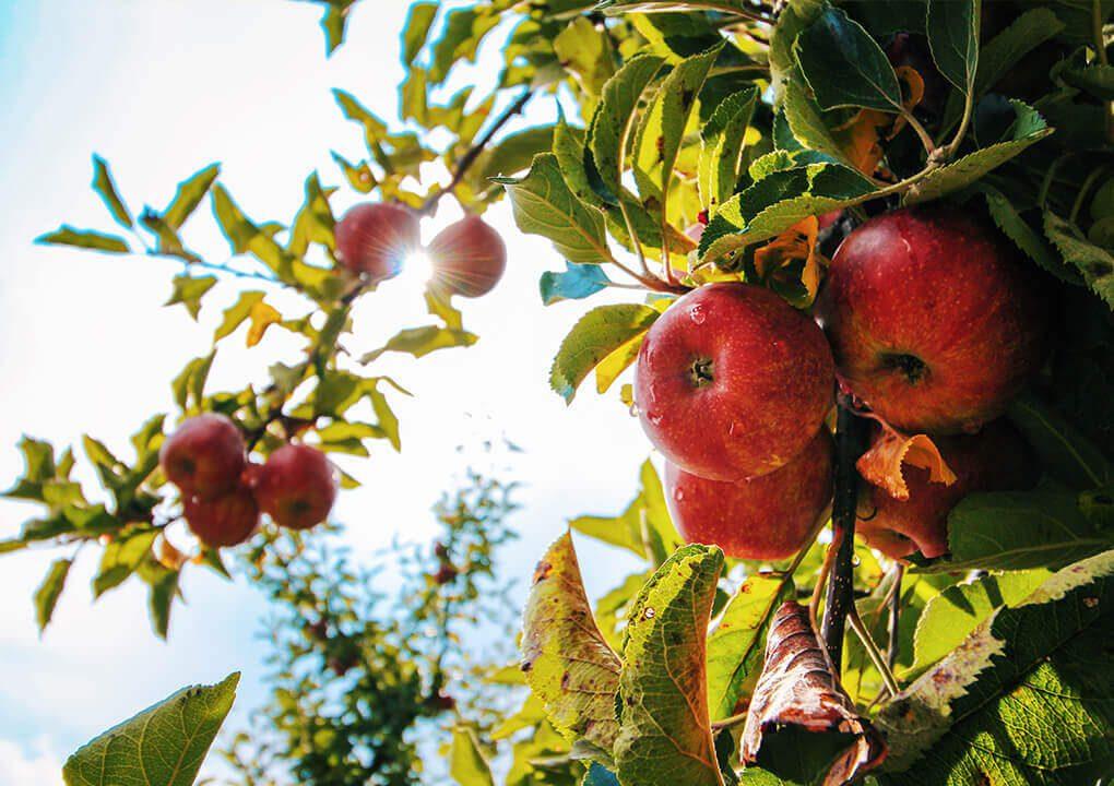 Appels gezond verfrissend